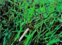 insecteenscene1.jpg